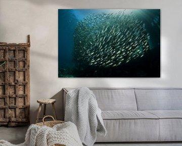 Vissen onder  de pier van Arborek van Filip Staes