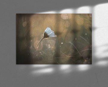 Blumen Teil 35 von Tania Perneel