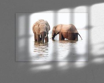 Olifanten eten en drinken in het water van Anja Brouwer Fotografie