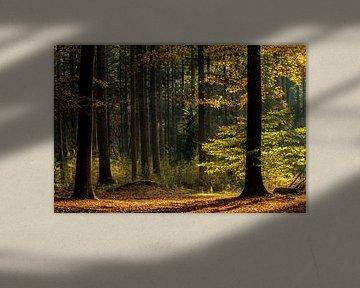 Herfstkleuren in het speulderbos van Ilya Korzelius