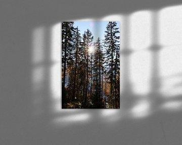Herfstzon en naaldbomen van Ginkgo Fotografie
