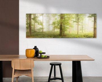 Beuken in de mist van Tobias Luxberg