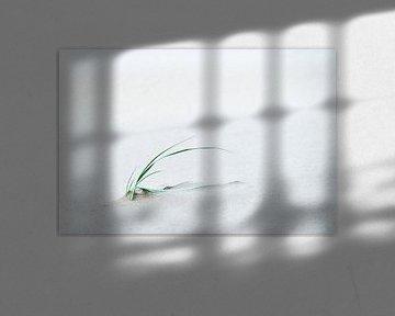 Vom Wind geformt von Ronald Mallant