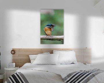 Eisvogel (Alcedo atthis) von Dirk Rüter