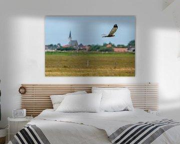 Texel - Fly-by Buizerd  langs Den Hoorn 01 van Texel360Fotografie Richard Heerschap