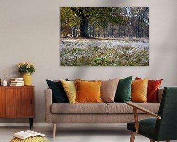 de dauw op de ondergrond accentueert de herfst in het bos van Studio de Waay