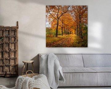 Boswandeling in de herfst van Kok and Kok