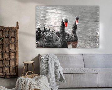 Schwarzes Schwanenpaar mit rotem Schnabel von Bobsphotography