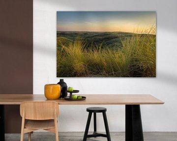Wuivend helmgras duinen Castricum-Egmond van Rutger van der Klip