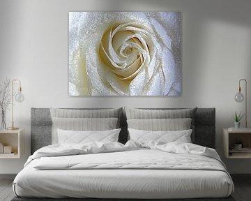 Golden Rose van Nicky`s Prints