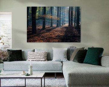 Herfst in het Speulderbos van Eelke Brandsma