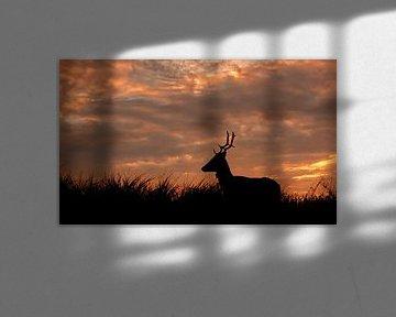 Silhouet van hert bij zonsondergang