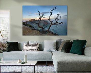 Een oude boom boven het meer van de vulkaan Ijen in Oost Java van Anges van der Logt
