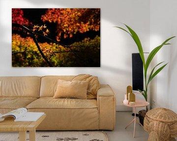 Japanse esdoorn bladeren in de herfst van Anges van der Logt