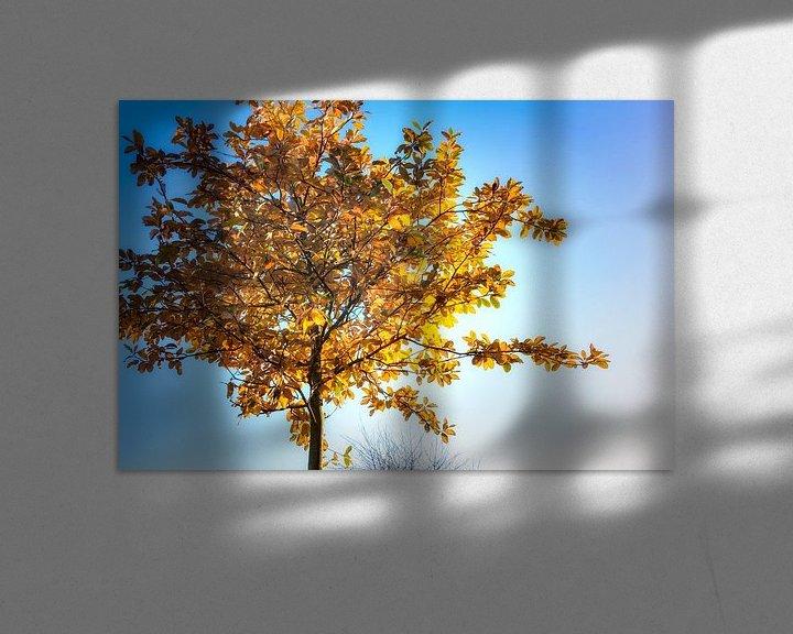Sfeerimpressie: Laagstaande herfstzon van Jan van der Knaap