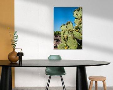 Cactus von Guenter Purin