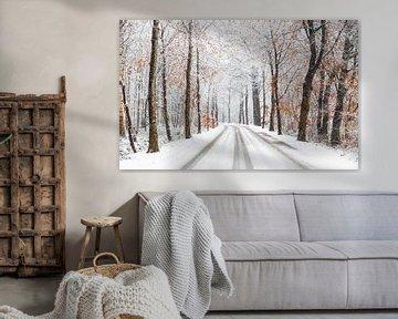 Winter-Waldallee von Joni Israeli