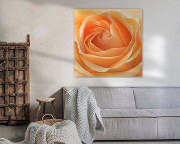 Oranjegele roos van Barbara Brolsma