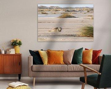 Zeehondje ligt te zonnen op het strand van Anja Brouwer Fotografie