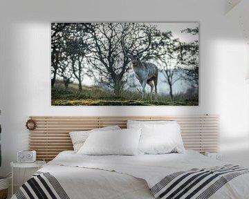 Herbstliches Hirsch-Foto von Simone Haaring