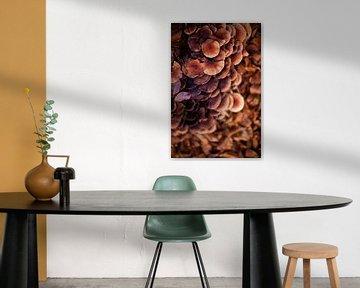 Waterval van paddenstoelen van Anouk Pross