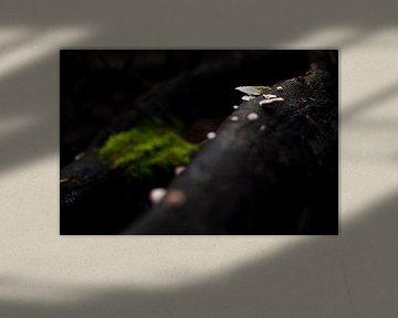 Licht in het donker van Anouk Pross