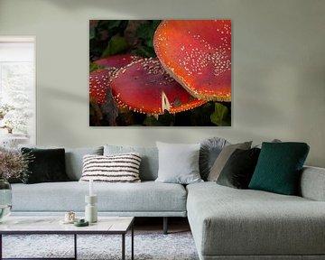 meerde vliegenzwammen (paddenstoelen) in het bos tijdens de hersft. van Eline Oostingh