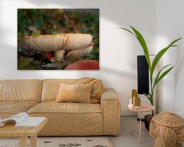 Fliegenpilz (Pilz) im Wald im Herbst. Nahaufnahme der Sporen von Eline Oostingh