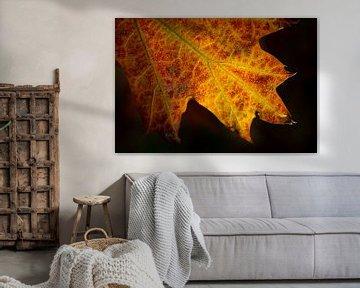 herfstblad close- up met duidelijke aderen van Eline Oostingh