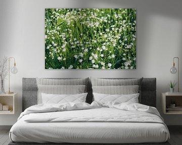Petites fleurs blanches sur Patrycja Polechonska