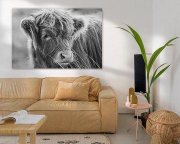Schottische Highlander-Kuh von Dirk van Egmond