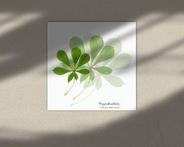Collage mit Blättern der Rosskastanie von Christian Müringer