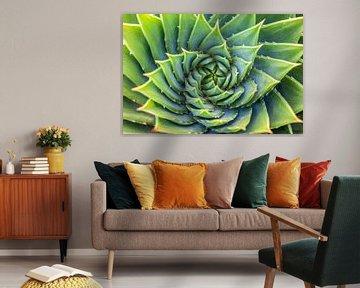 Grüne Spirale von Christian Müringer