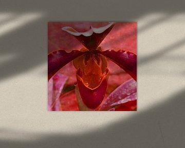 Pflanzenerotik von christine b-b müller