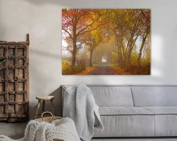 Herfst-Weg (Herfstkleuren in Drenthe) van Caroline Lichthart