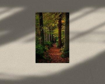 Un chemin forestier plein de feuilles d'automne sur Monique Bekius