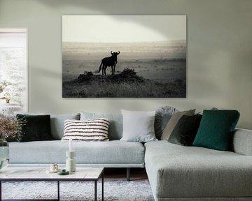 Silhouette sur la colline sur Sharing Wildlife