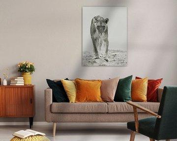 Fokus - Löwe von Sharing Wildlife