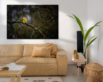 Laatste gele herfstblad in de donkere kale takken van een oude boom, wabi sabi concept, symbool voor van Maren Winter