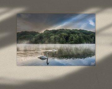 Schwäne auf dem Cranenweyer bei nebligem Sonnenaufgang von John van de Gazelle