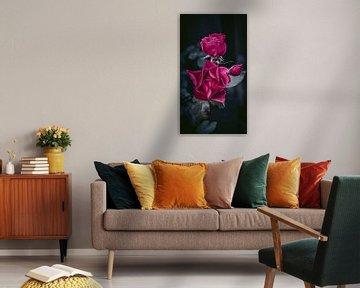 rosen von AciPhotography