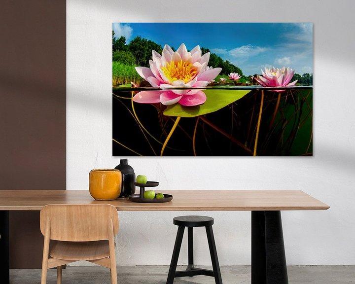 Sfeerimpressie: De wereld van de Waterlelies van Filip Staes