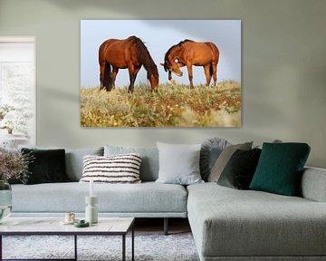 Paarden op de kwelder - Natuurlijk Ameland van Anja Brouwer Fotografie