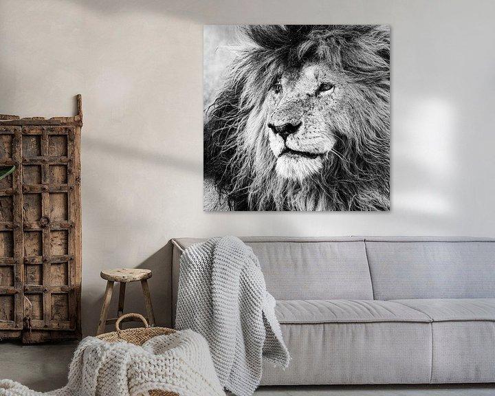 Sfeerimpressie: De koning van de Masai Mara: Scar van Sharing Wildlife