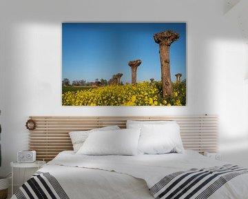 World of yellow and blue van Haaije Bruinsma Fotografie