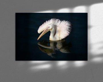 De eenzame pelikaan van Vincent Willems
