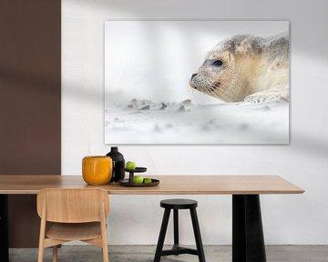 Seehund am Strand - Natürliches Ameland von Anja Brouwer Fotografie