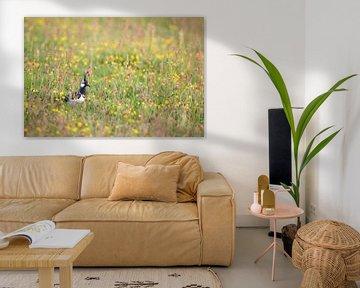 Kiebitz im krautigen Gras - Natürliches Ameland von Anja Brouwer Fotografie
