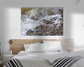 Rotschenkel duscht - Natürliches Wattenmeer von Anja Brouwer Fotografie