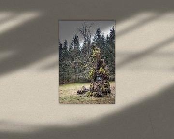 knoestige boom van Jürgen Schmittdiel Photography